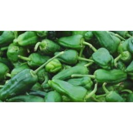 Padron Peppers per/kg