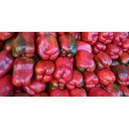 Morron Pepper per/kg