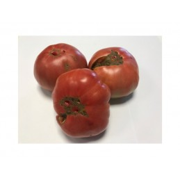 Organic Feo de Tudela Tomato per/kg