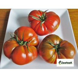 "Tomato Raf ""Premium"" per/kg"